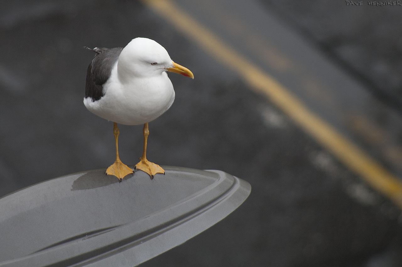 seagull04
