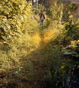 tweed_jane_path