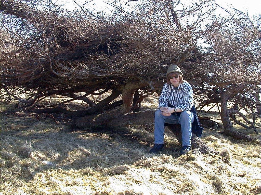 jane_cap-law-trees