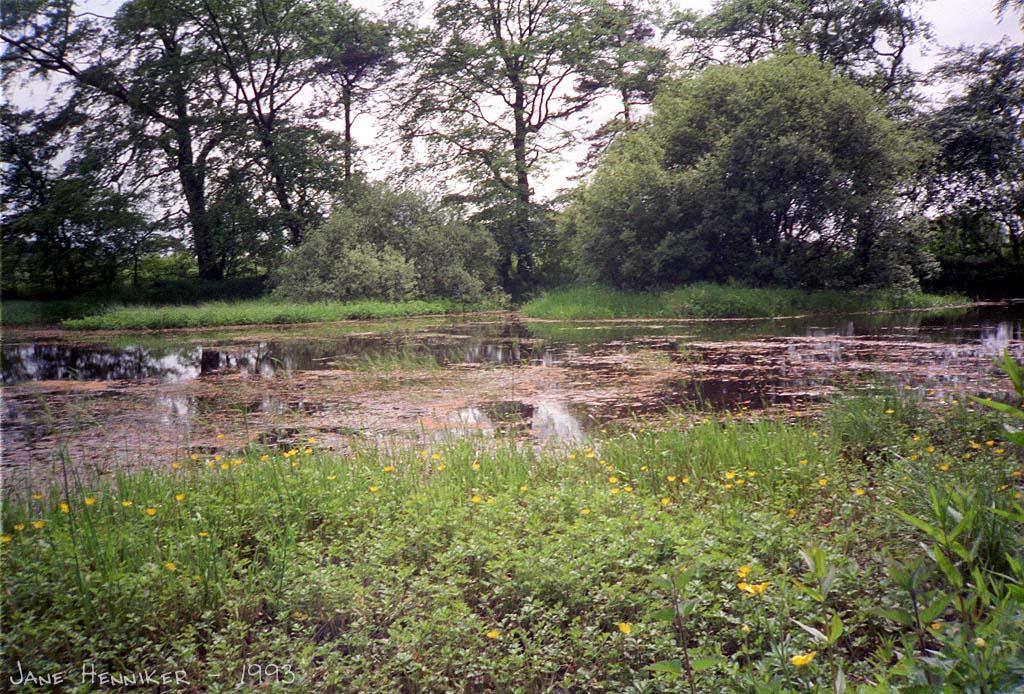 pond_roslin