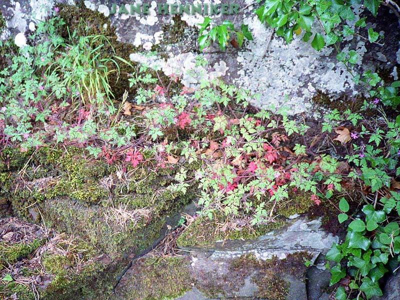 rockflora1