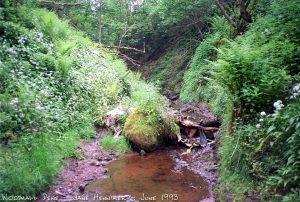 woodhalldene