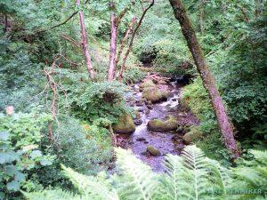 woodhalldene3