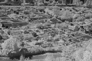 MidmarPaddock23allotments_ir