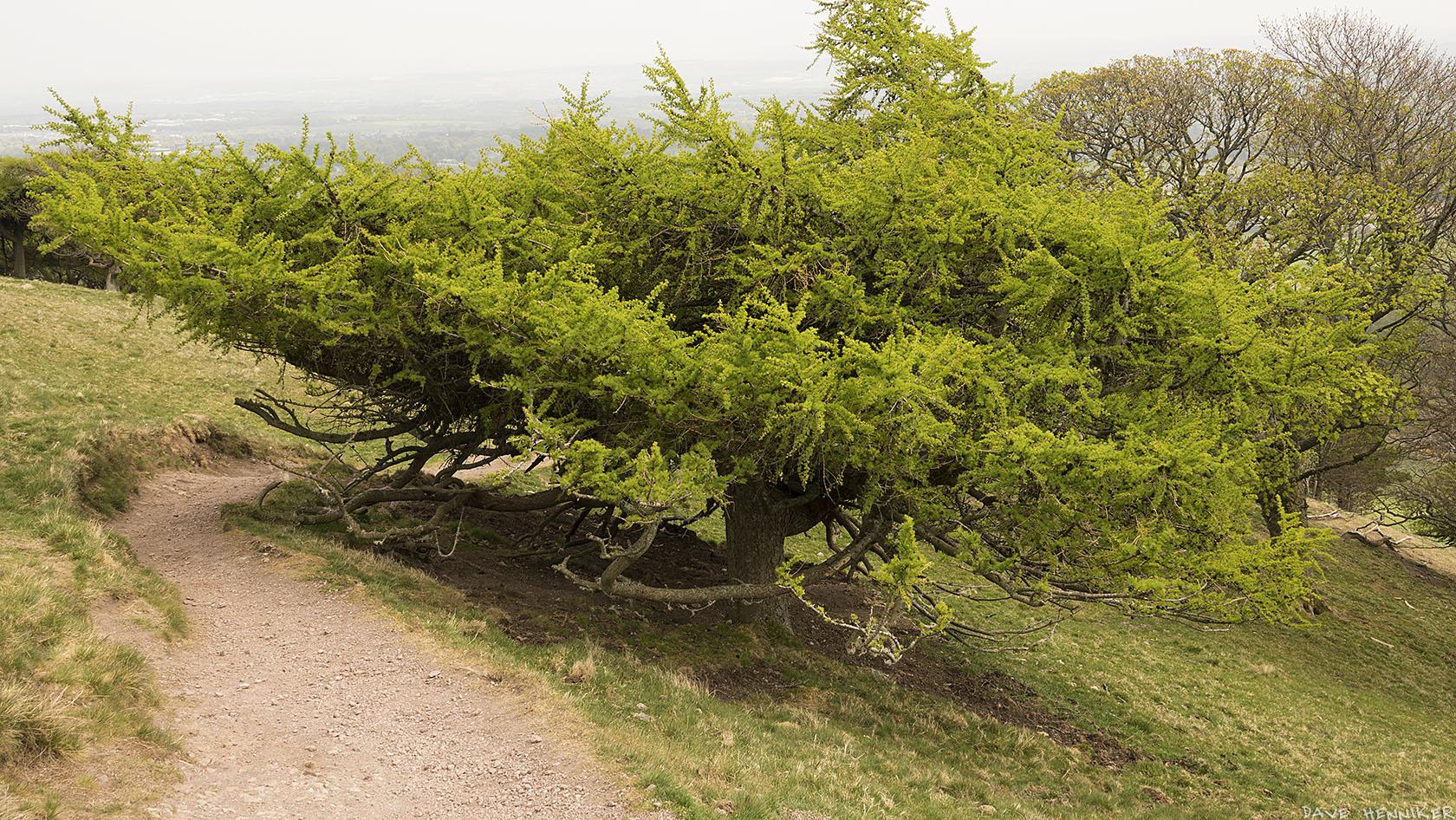 turnhouse_hill_tree