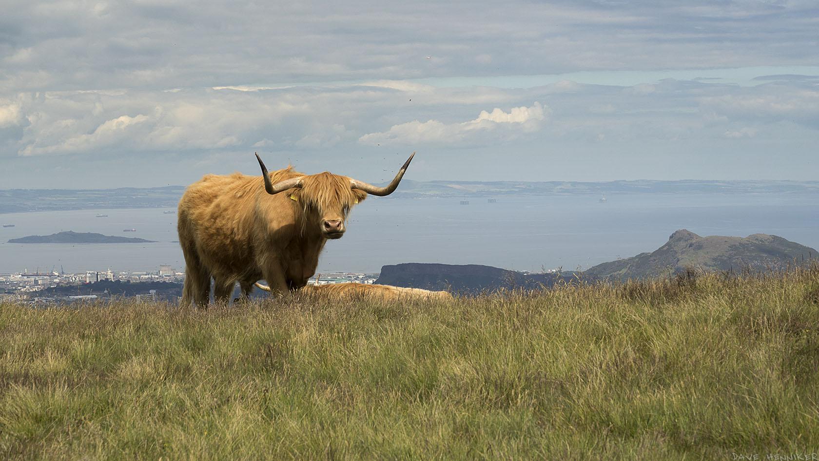 cattle2017July(e)