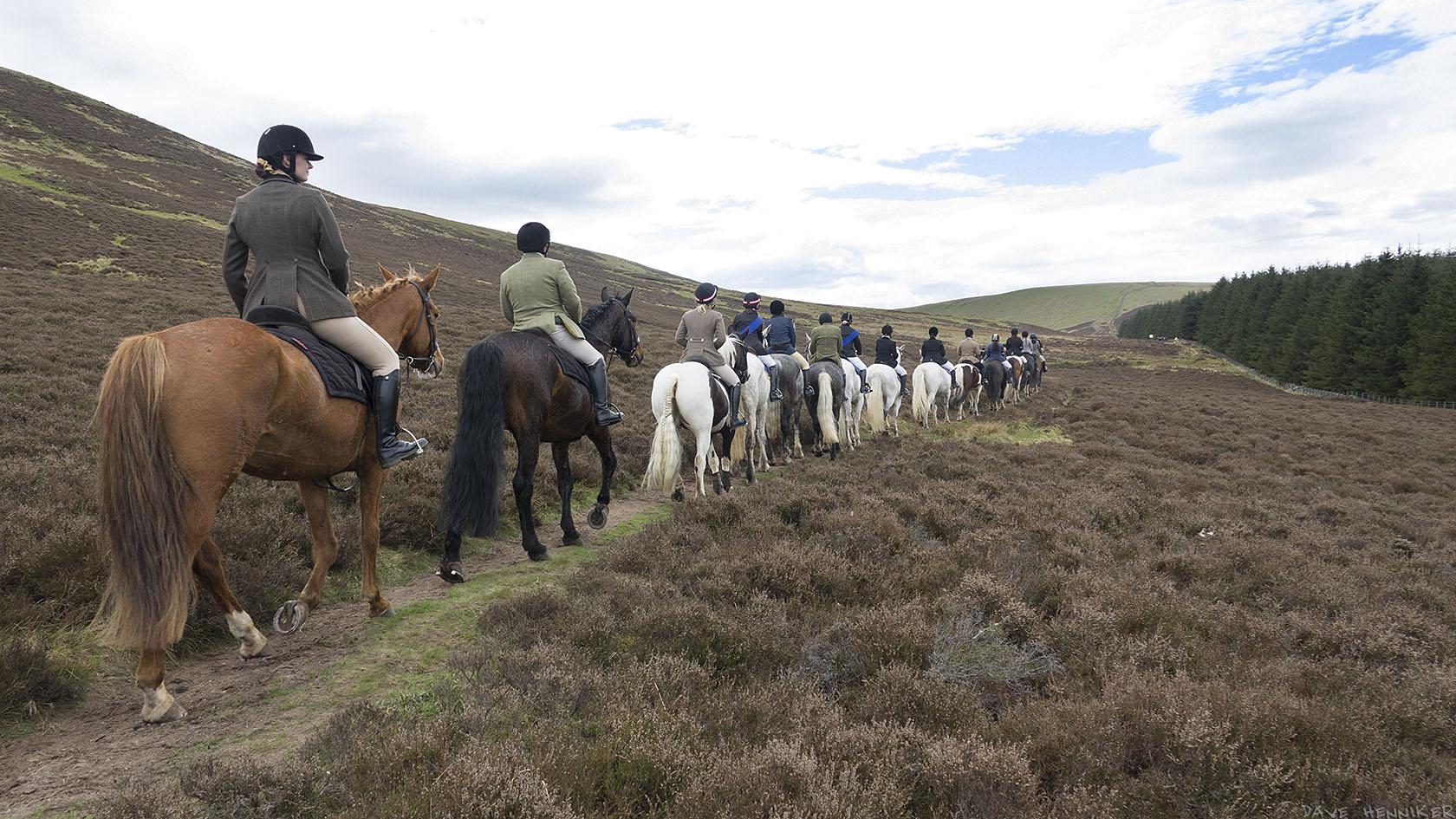 horses(d)