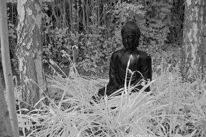 Buddha2ir