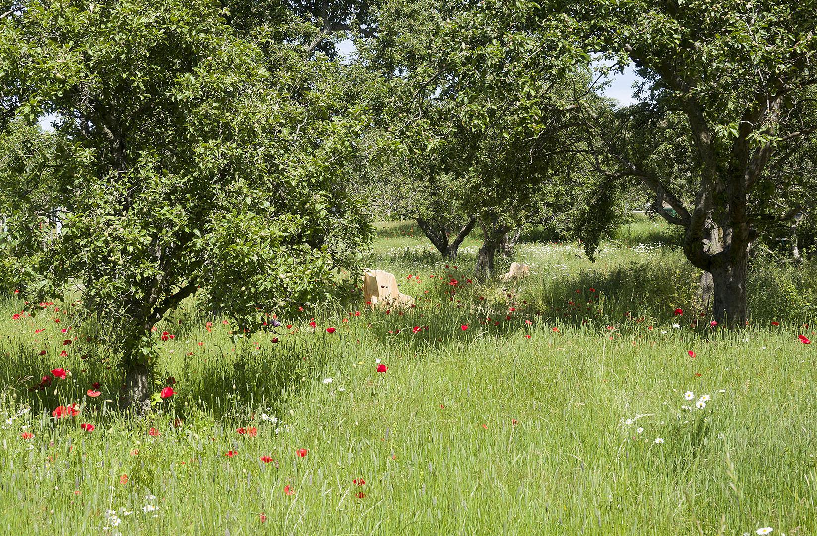Orchard2018(c)