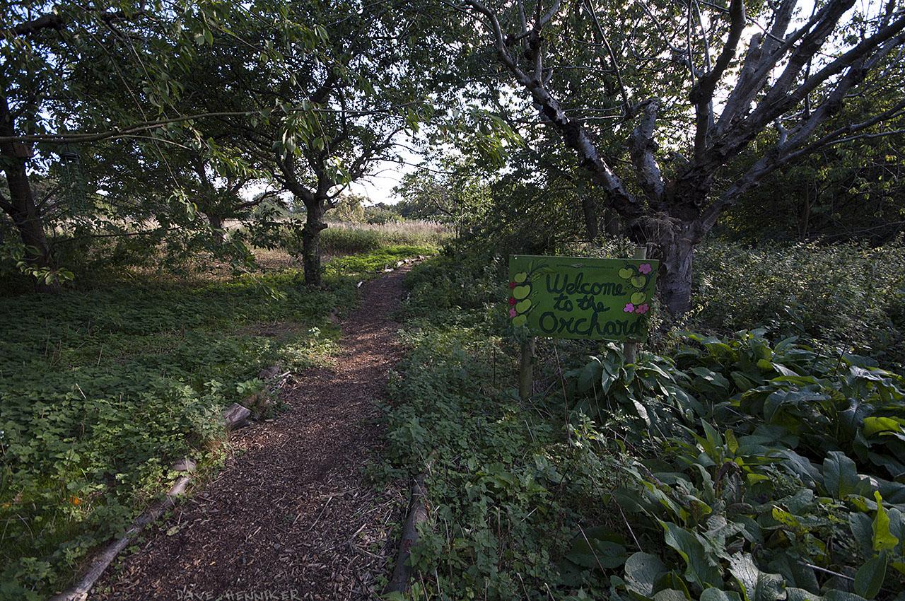 OrchardWalk29