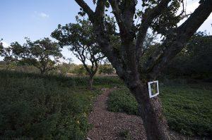 OrchardWalk35