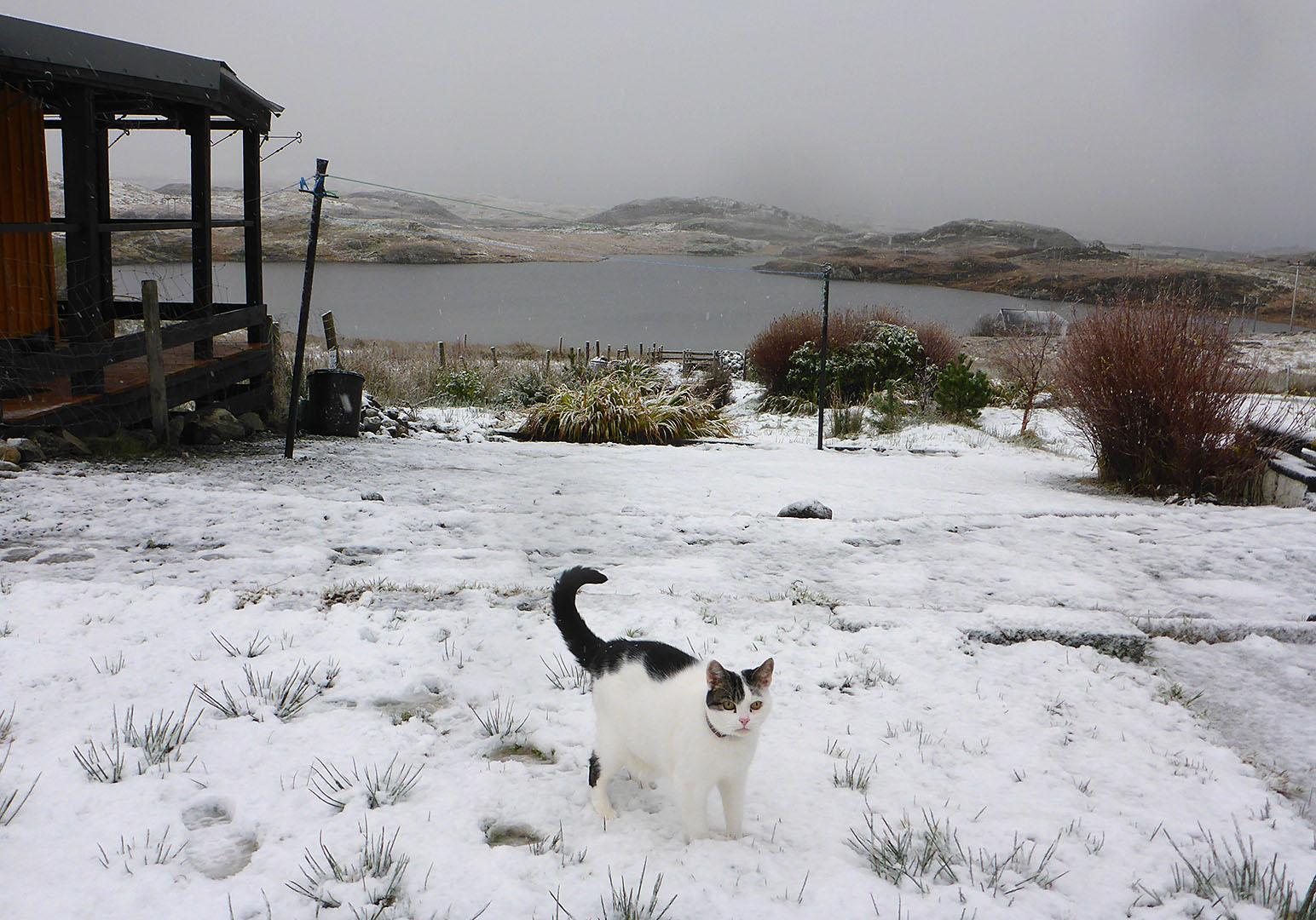 Ray_snow