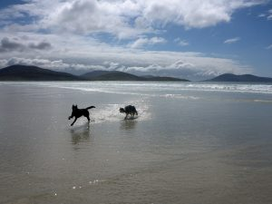 11 Dogs on beach