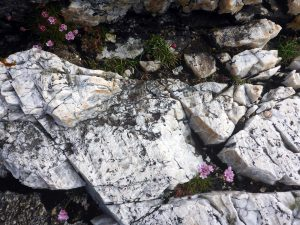 99 White rocks, pink flowers