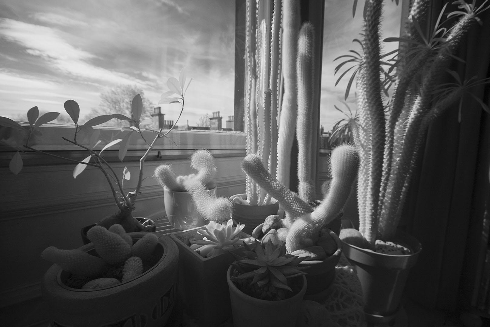 cactus07IR