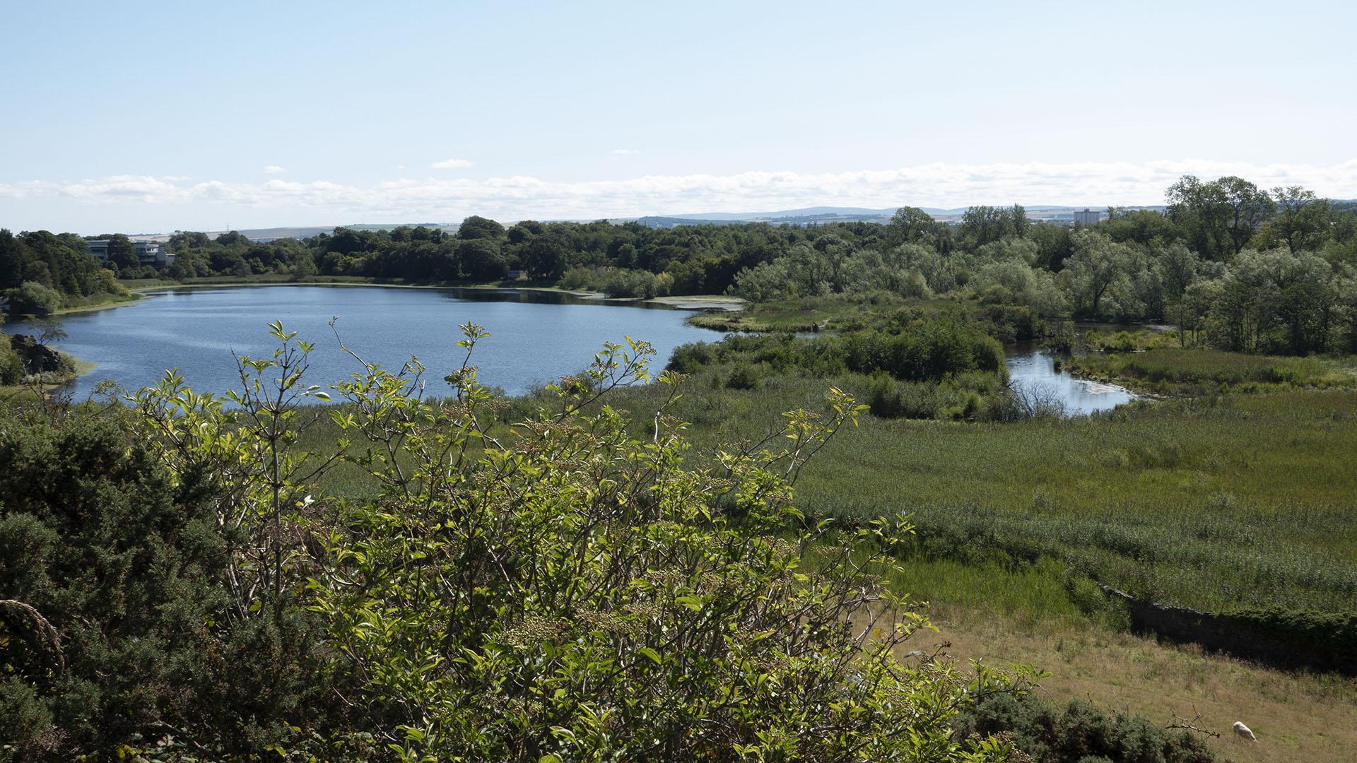 Duddingston Loch 13