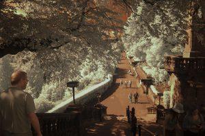 gardens_IR33 665