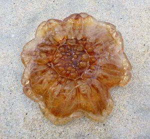93 Jellyfish Luskentyre